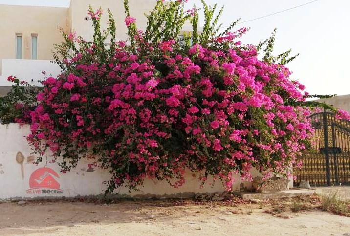 Grande villa à vendre en zone urbaine Djerba - Réf V535